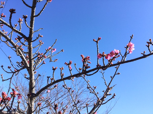 3月のTOEICテスト:梅の花